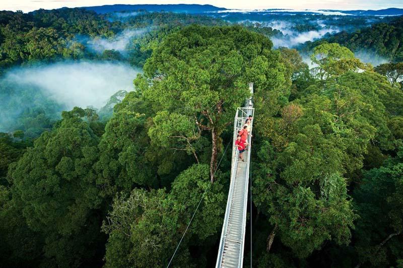 Bầu không khí xanh của tài nguyên rừng tại quốc gia này