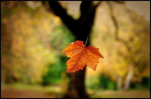 Niềm tin là chiếc lá