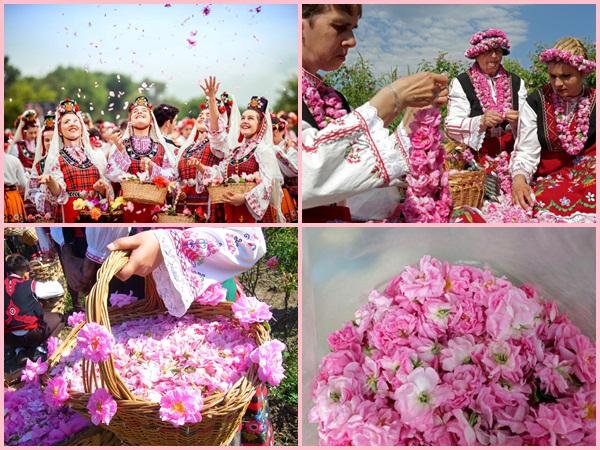 Thung lũng hoa hồng Bulgaria trải dài khoảng hơn 140 km, nằm giữa một vùng núi hẹp của dãy Balkan, trên bán đảo cùng tên ở châu Âu.