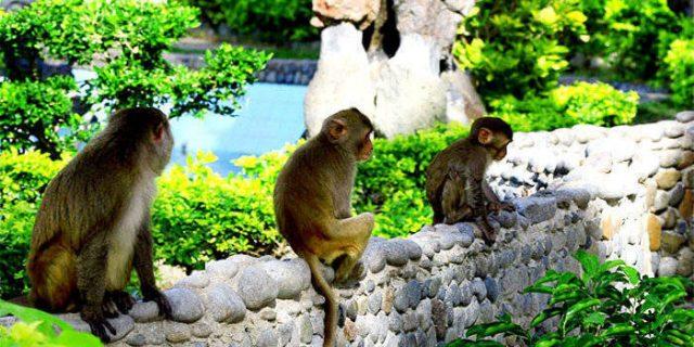Những chú khỉ thân thiện